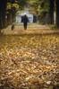 il tappeto di ricordi (swaily ◘ Claudio Parente) Tags: autunno avezzano marsica abruzzo autumn foglie foliage swaily claudioparente d300 nikon