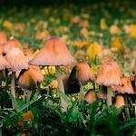 Autumn mushrooms thumbnail
