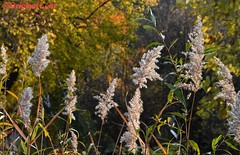 DSC_2473 (Original Loisi) Tags: herbst herbstfarben herbstgold herbsthimmel autumn fall fallcolours autumncolours natur nature wildlife colours farben bunt laub baum bäume forest wald blätter leaves leaf