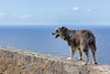 Ca (Siurell Blr) Tags: baleares balearicislands illesbalears islasbaleares perro dog gos chien
