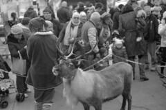 Reindeer, Southport (the underlord) Tags: southport nikon nikonrangefinder nikons2 nikkorh5cmf2 50mm park fujineopanacros acros100 blackandwhite film kodakd76 7minutes15secondsatstock 35mmfilm rangefindercamera