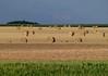 """Nature moderne !  """"Vendée - France""""   -   Modern nature! (josianelavielle) Tags: champs rouleaux ciel nature paysage bosquet"""