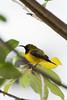 Guess who's back again? (DanielTanSH) Tags: bird birds animal planet home singapore hdb plant photo photography nikon d500
