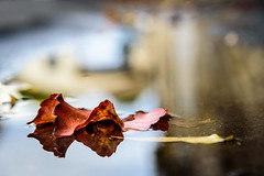 Autumn in Reflection