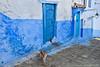 Chefchaouen (simone_a13) Tags: morocco maroc chefchaouen blue street lane alley cat medina historic door