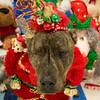 Levi (Ellsasha) Tags: dog canine therapydogs rescue foster party educationalambassador houston readingprogram
