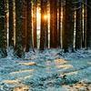 Snowy woodland sunset (Chris Jones www.chrisjonesphotographer.uk) Tags: devon snowing snowy cold nature natural photographer jones chris trees woods tree bark sunset white winter snow woodland wood