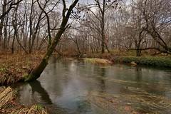 Spring Creek (namhdyk) Tags: canon canonpowershot canonpowershotg7x flyfishing fishing nature