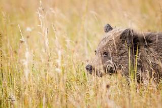 Brown Bear Cub Safe Place