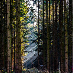 Light Invasion (*Capture the Moment*) Tags: 2016 forest licht lichtstrahlen light lightbeam rayoflight sonnenstrahlen sonya7m2 sonya7mii sonya7mark2 sonya7ii sonyilce7m2 sonysel90m28g wald winter