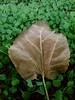 Hayat bir hikaye gibidir,  ne kadar uzun olduğu değil  ne kadar güzel olduğu önemlidir.  ~ Seneca ~  #photography #nature #denizli #meska #esentepe #green #autumn #leaf #fall  #mycamera #kadraj #benimkadrajim #objektif #objektifimden #myart #myartgalery # (mrbrooks2016) Tags: kasim sonbahar meska freeart autumn myartgalery photography objektifimden mycamera green artwork freeartist myart leaf nature denizli kadraj fall benimkadrajim objektif sanat esentepe