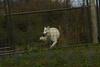 IMG_1311 (goaniwhere) Tags: wolf animal wolves wildanimal sanctuary