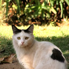 Delores (CatnessGrace) Tags: cats chats katzen gatti gatos blackandwhitecats coth coth5