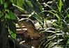 2010_ac_Monitor Lizard (Wellsman2010) Tags: monitor iguana kuala lumpur zoo asian asia wildlife nature trees canon 70300 50d