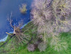 Blasted tree (robmcrorie) Tags: trees river trent soar aerial colour water grass