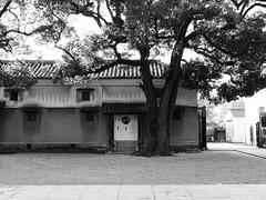 四天王寺 本坊庭園周辺 (sakemoge) Tags: panasonic g8 osaka japan autumn colour 25mmf14 panaleica temple garden bw roof tile