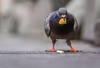 I don't understand why people would want to get rid of pigeons. They don't bother no one.- MIKE TYSON (Lorrainemorris) Tags: ireland dublincity bird a6000 blur colours bokeh dof batis zeiss sony cigarettebut bread eating homebird pigeon