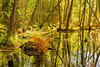 Forest Mirror (Peter Vestin) Tags: nikondf sigma50mmf14dghsmart siruin3204x siruik30x adobecreativecloudphotography topazlabscompletecollection alster karlstad värmland sweden alsterån nature landscape seascape reflections