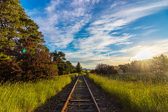 overgrowing unused train tracks (Daedalus-) Tags: traintracks abandoned unused trainline sunset australia goldenhour goldenlight canberra railway sunflare flare overgrown longgrass clouds