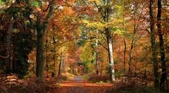 Waldweg (wernerfunk) Tags: hessen
