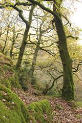 (Karsten Fatur) Tags: landscape forest nature woods autumn fall wales uk unitedkingdom britain europe travel adventure explore leaves moss green llanberis snowdonia