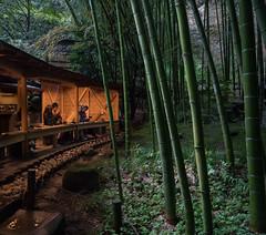 Enjoying green tea and the sound of the rain (Big Ben in Japan) Tags: bambootemple greentea hokukuji japan kamakura matcha