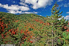 View From Owls Head In Late September (freshairphoto) Tags: adirondack park owls head trail foliage autumn fall clouds september artspearing nikon tripod