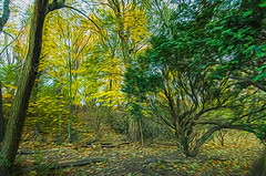 1338__0546FLOP (davidben33) Tags: brooklyn 718 ny quotnew yorkquot quotprospect parkquot autumn 2017 fall trees bushes leaves lake pets gooses ducks water sky clouds colors yellow green blue people quotstreet photosquot