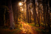 There's a Light Around the Corner (Augmented Reality Images (Getty Contributor)) Tags: woodland longexposure perthshire landscape leefilters scotland nature autumn trees sunshine countryside canon leaves forest light