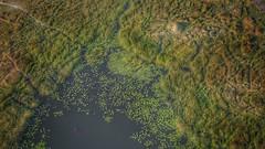 Un hippopotame dans son bain (Marmad31) Tags: afrique delta survol okawango botswana