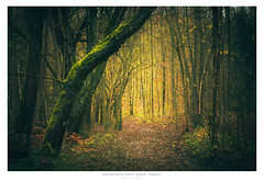 Autumn Forest (AmBasteir) Tags: nikond810 sigmalens erzgebirge sachsen saxony germany oremountains forest wald wood nature landscape outdoor