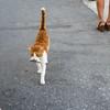 in bocca al gatto!! (Maluni) Tags: creta crete greece grecia chania animals cats gatto gatti cat animali