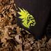 171119-leaf-chief-tag-tagged.jpg