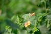 Petals and wings (sanat_das) Tags: kolkata embypass nature butterfly flowers d800 28300mm