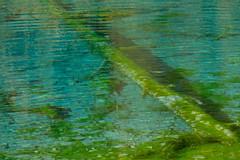 DSCF1993 (Lakuda-san) Tags: lac valais troncs lacbleu arolla switzerland wallis