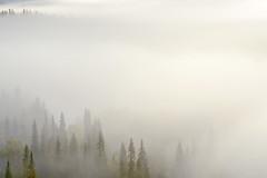 hidden (Sandra Bartocha) Tags: sandrabartocha lys lyspublishing finland oulanka kitkariver scandinavia