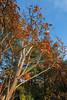 DSC08093 (Digital_trance) Tags: 日本 日本東北 楓 楓葉 紅葉 山形 青森 秋田 yamagata やまがた akita あきた aomori あおもり landscape 日本風景 japan 岩手山