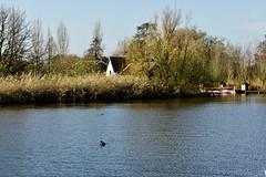 DSC05991 (hofsteej) Tags: middendelfland holland zuidholland netherlands vlaardingervaart broekpolder