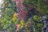 DV2A9335 (Akita2017) Tags: 日本 日本東北 楓 楓葉 紅葉 山形 青森 秋田 yamagata やまがた akita あきた aomori あおもり landscape 日本風景 japan