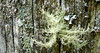 fruticose lichen on fence post, Elljean plant, Easley (Martin LaBar) Tags: southcarolina pickenscounty lichen post wood macro