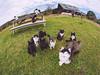 天国 Heaven (かがみ~) Tags: tashirojima panasonic cat gx8 miyagi ishinomaki japan samyang75mmf35fisheye fisheye neko ネコ 宮城 日本 猫 田代島 石巻 ishinomakishi miyagiken jp