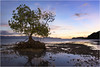 Coron Dawn (www.bc3.photography) Tags: sunrise dawn photography philippines thephilippines sky mangrove water coron palawan reflection morning