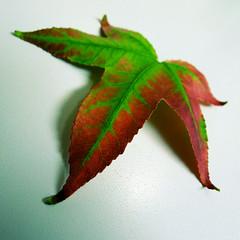 Green Leaf (rustman) Tags: green leaf fall found santaclara square vibrant saturated color panasonic lx5