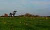 Iron Horse (davidwilliamreed) Tags: field rural farm agriculture metal sculpture universityofgeorgia uga greenecountyga