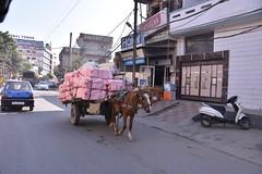 Amritsar has got numerous horse carts too
