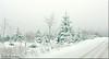 bad weather (friedrichfrank1966) Tags: highkey snow weather bad street forest eisenstrase siegenwittgenstein winter white trees foggy fog landscape sky wolken winterlandschaft clouds