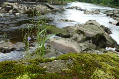 Hidden Belle at Marles Wood