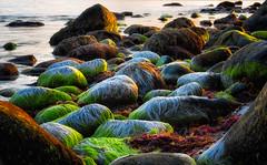 Slippery and green (languitar) Tags: norway rock pebblestone beach ocean mølen colors wet northsea green evening coast sunset sea kingdomofnorway norge rocks shore vestfold no