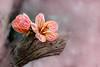 (kumherath) Tags: kumariherathphotography canon600d flower 7dwf flora