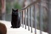 black cat (Sitoo) Tags: baleares illesbalears mallorca sacalobra cat animal black